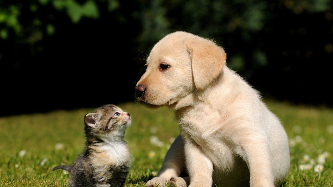 Evcil Hayvan Sahiplerini İlgilendiren Yeni Zorunluluk!